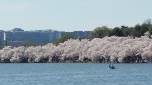 The wind died down enough for people to use the paddle boats on April 12th.  Very fun!